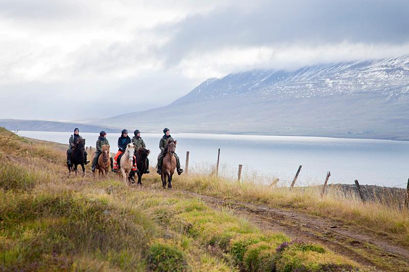 Islannin luontoon on upeaa tutustua varmajalkaisella islanninhevosella. (Kuva: Björgvin Hilmarsson)