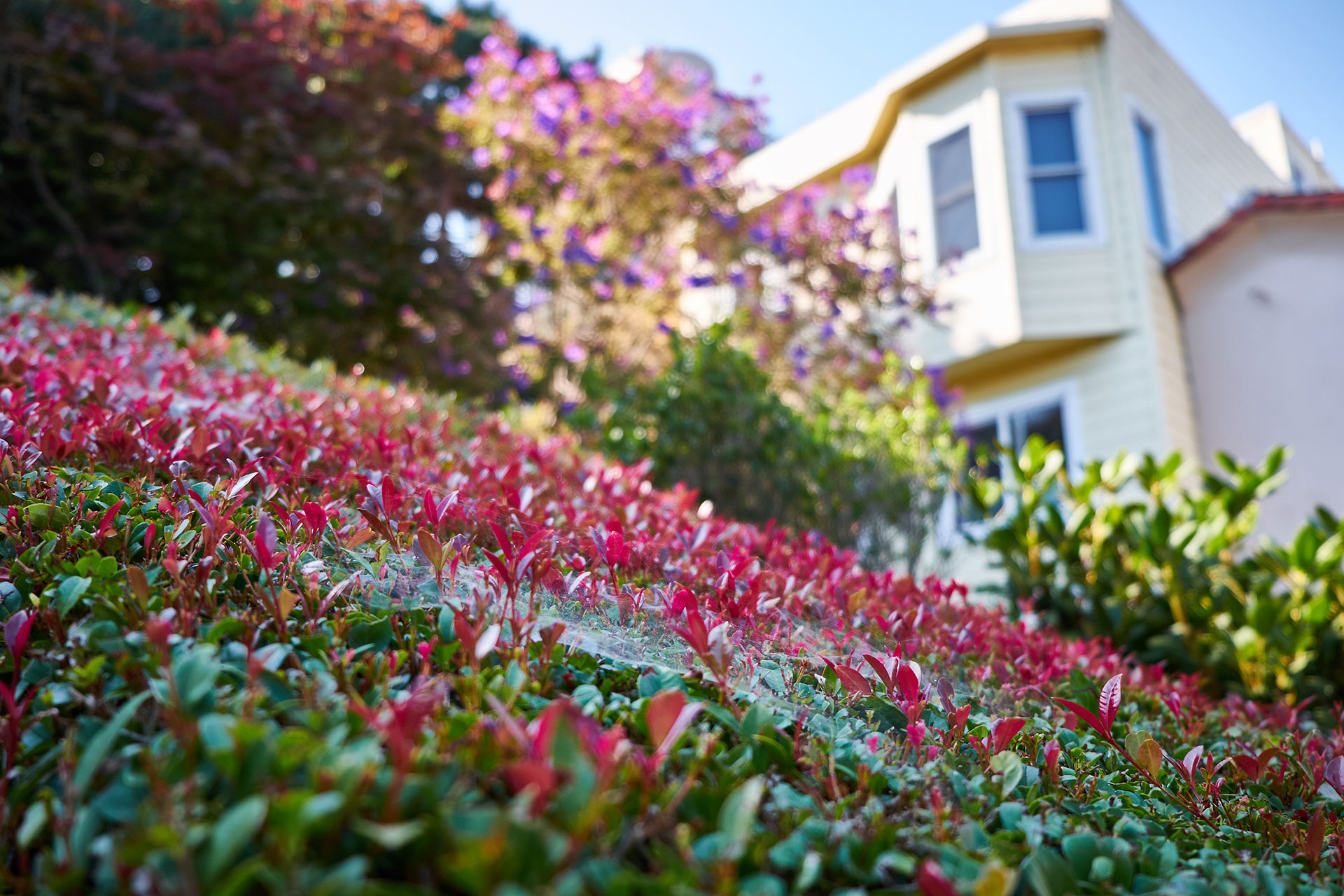 Filbert Steps -portaikon puutarhanäkymiä. Kuva: Kārlis Dambrāns, Flickr.com, CC BY 2.0.