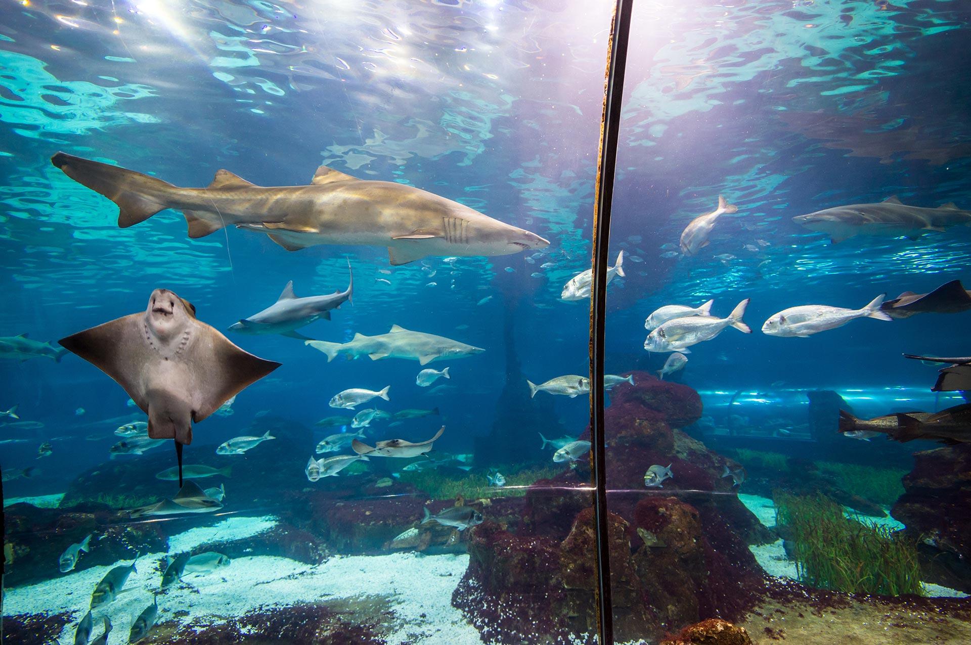 Barcelonan akvaario
