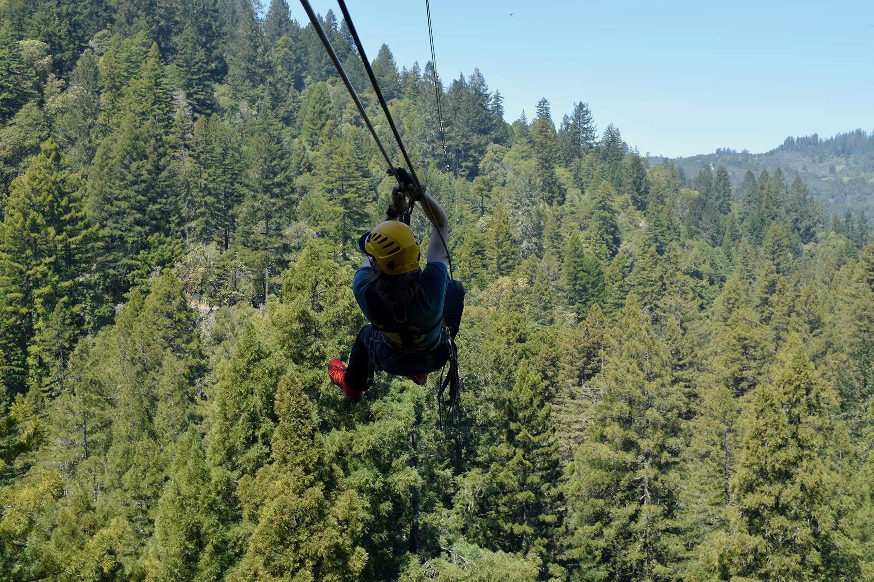Sonoma Canopy Toursin retkellä liidellään punapuumetsien yllä.