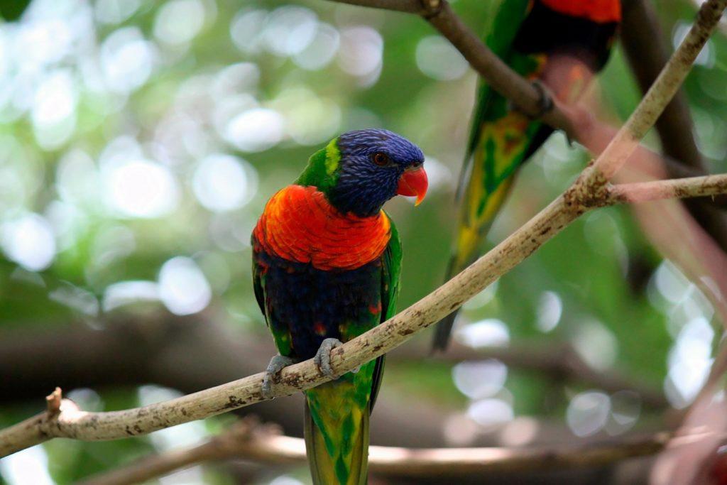 Jurong Bird Parkissa voi tutustua trooppisiin lintulajeihin. Kuva: Pixabay