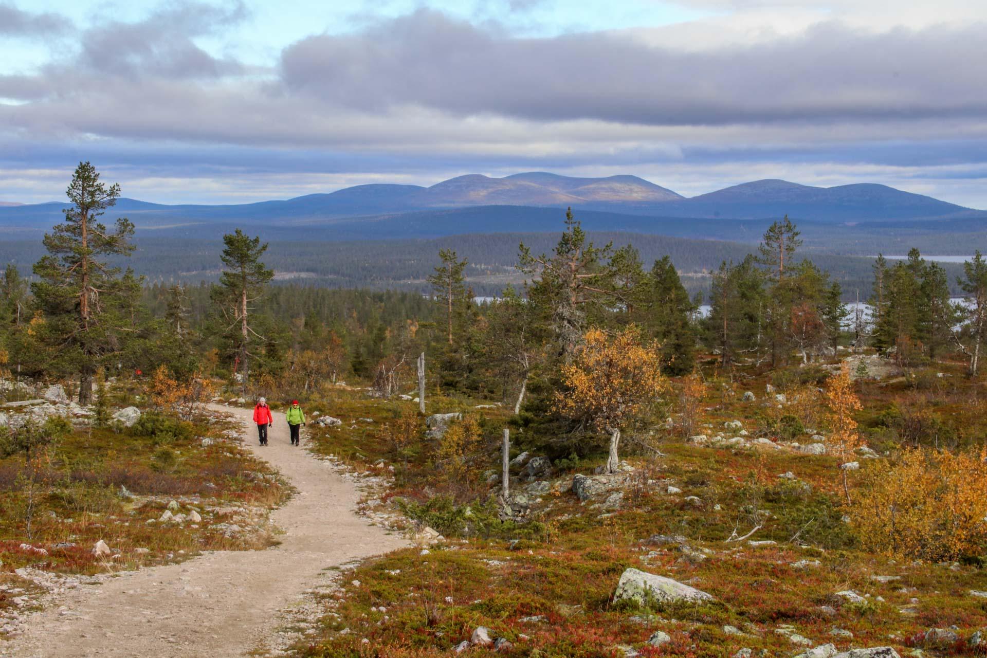 Särkitunturilta voi ihailla horisontissa näkyvää Pallaksen tunturijonoa. © Liisa Kuittinen