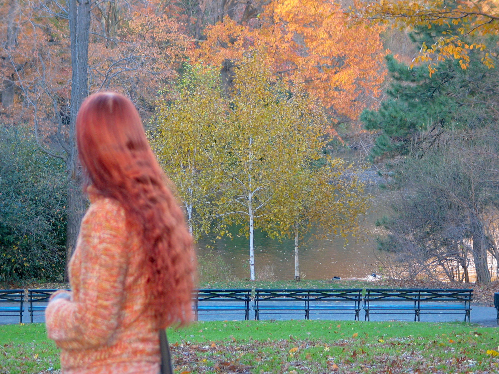Central Parkin värejä. Kuva: Miika Mattila