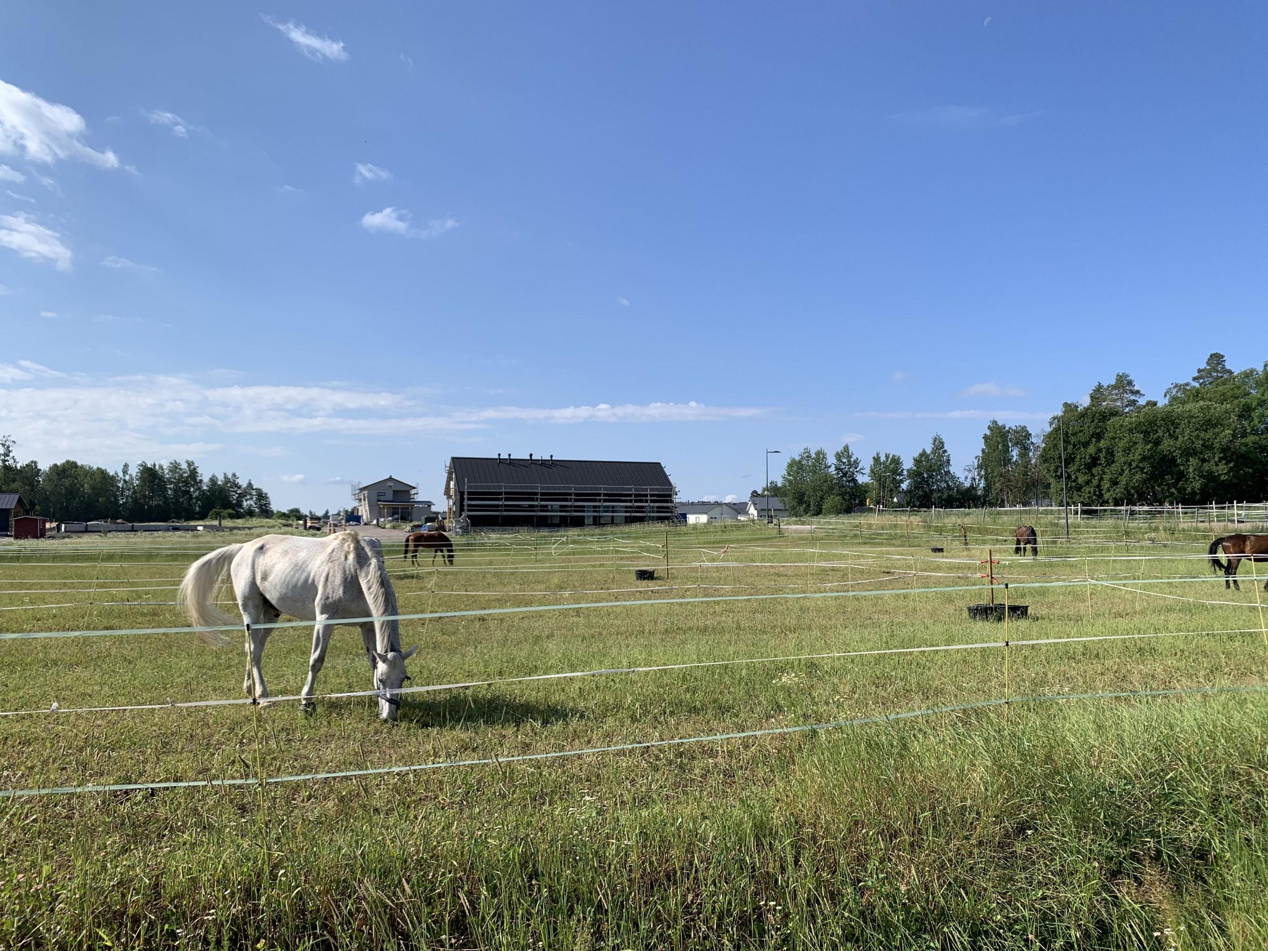 Lepolassa sijaitsee myös Ratsastuskeskus Aino. © Moona Laakso