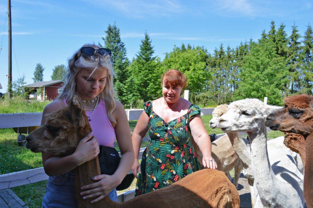 Nana Hjelt neuvoo somerolaishelsinkiläiselle Tiktok-tähdelle Aleksandra Laurilalle, kuinka Peach-alpakkaa voi pitää kiinni kaulasta ja silittää selästä.