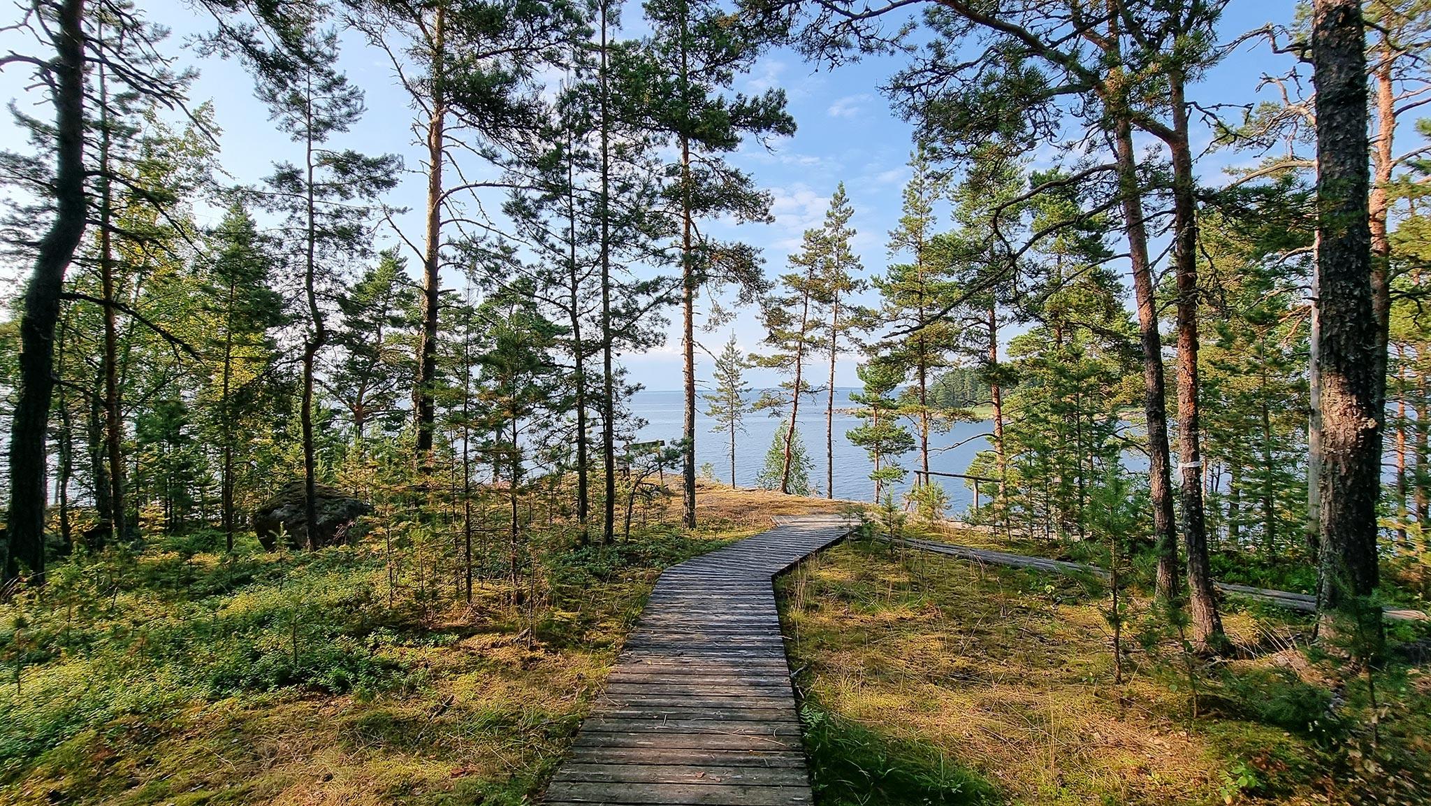 Liikkumista saaristokylässä helpottavat metsäiseen maastoon rakennetut puiset polut, jotka myös näyttävät tunnelmallisilta. Kuva: Päivi Arvonen