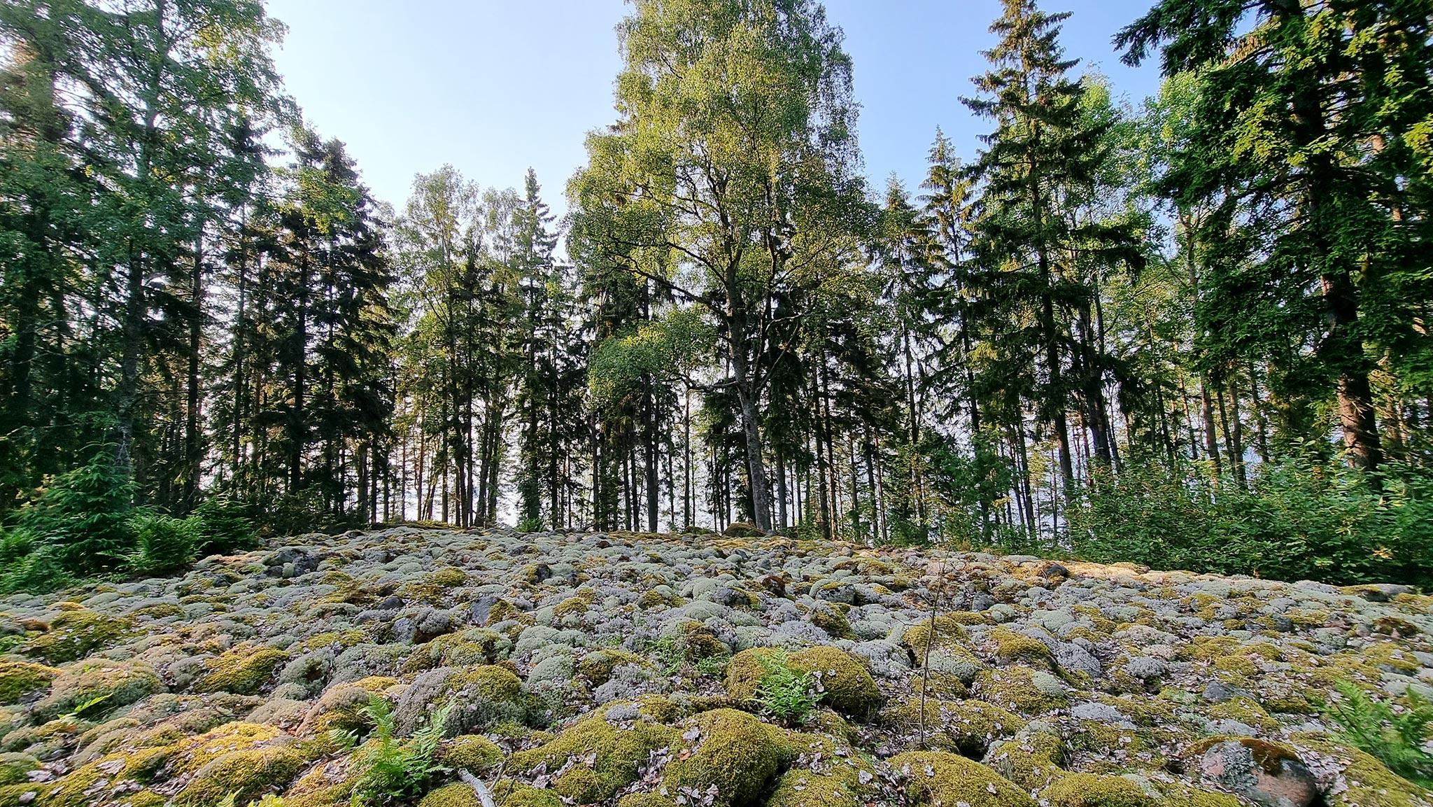 Saaren asumattomassa päässä kohoaa pyöreiden kivien peittämä kumpu, joka saattaa olla viikinkien hautamuodostelma. Kuva: Päivi Arvonen